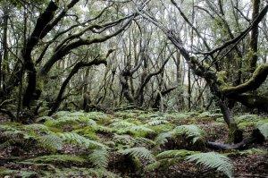 fotos La Gomera, Canarias. Una joya de la Naturaleza