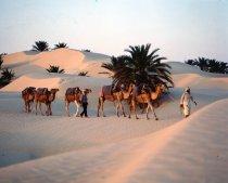 fotos Túnez, sensación paradisíaca con vistas a jardines de ensueño
