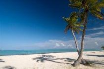 fotos Punta Cana, el lugar perfecto para sus vacaciones. República Dominicana