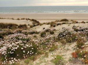 fotos Huelva. Parque Natural de Doñana