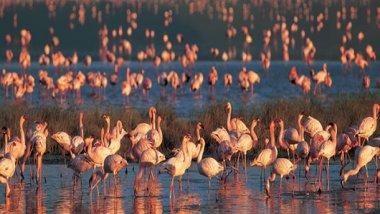 Manyara, un paraíso para los amantes de aves
