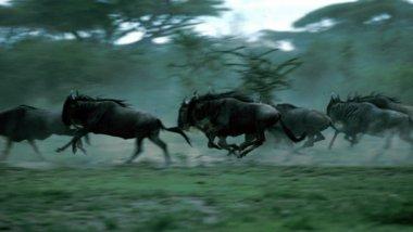 Serengeti, Maravilla Natural de África