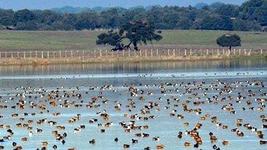 Doñana, una biodiversidad única en Europa