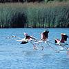 Doñana, vivir la natulareza