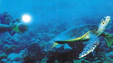 Seychelles, submarinismo