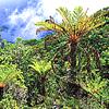 Papua, la segunda isla más grande