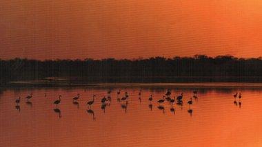 Paraguay, observación de aves
