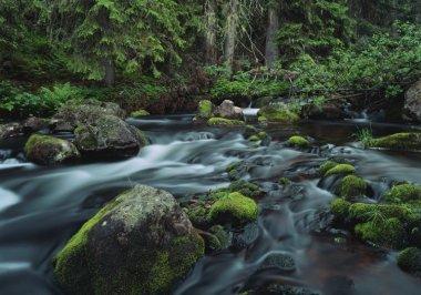 Suecia, guía de parques nacionales