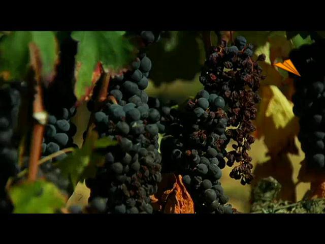 video Rioja - Álava. La ruta del vino, donde el vino y la cultura son sinónimos