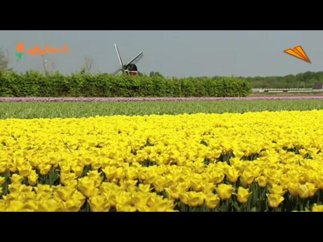 video Holanda, clásica y típica: disfruta de los iconos holandeses