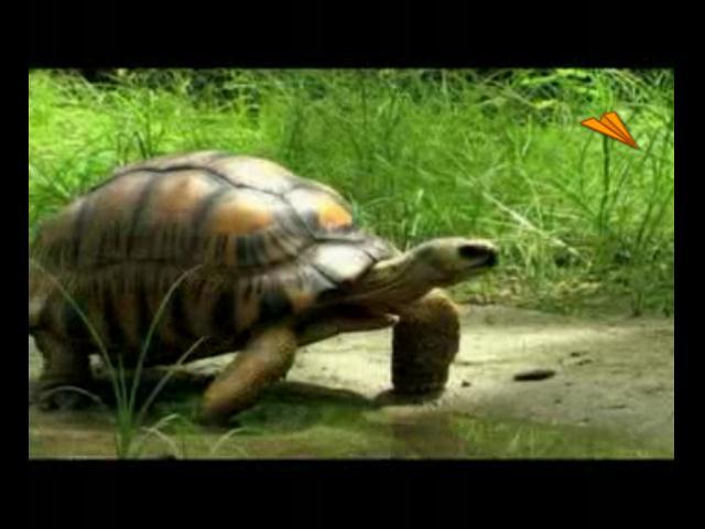 video Islas Seychelles, flora y fauna