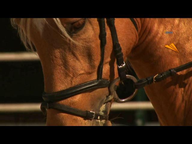video Jerez, rutas ecuestres