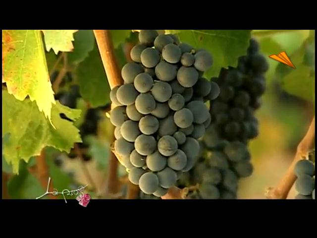 video La Rioja - Logroño, Capital española de la gastronomía