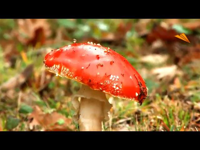 video Ruta micológica
