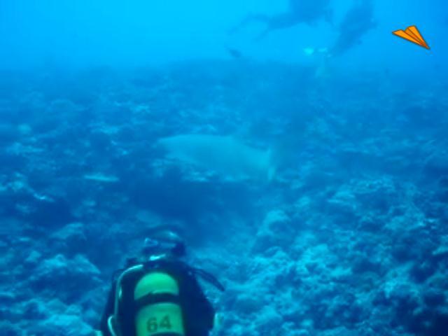 video Tahiti, tiburones Limón en Bora Bora